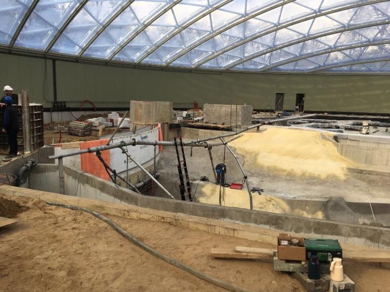Boomkern geplaatst in nieuwe Mangrovehal van Koninklijke Burgers' Zoo