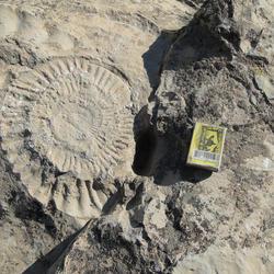 Kugitang Fossils