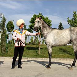 Ahalteke horse (3)