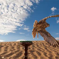 Западная часть пустыни Каракум (2)